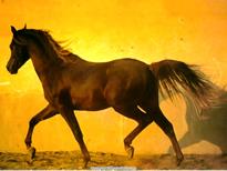 Walking-Horse-wall.jpg