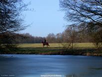 ab-voorheuvel-paard-220203-a-w-cr.jpg